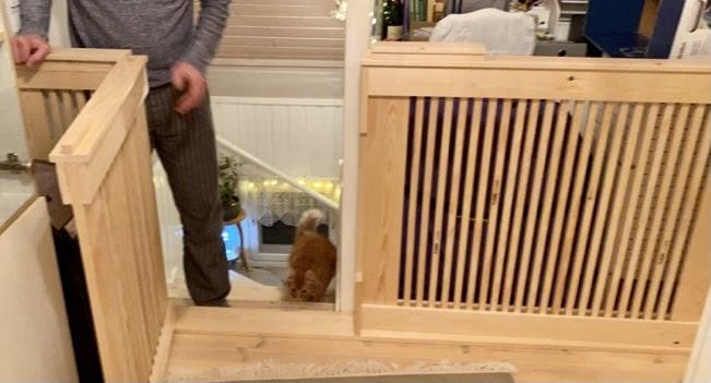Jussin rakentama portti portaiden turvaksi- pentu varma, Helmi emoa se ei juuri edes hidasta